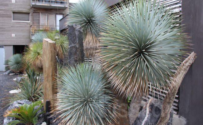 jardin Montpellier