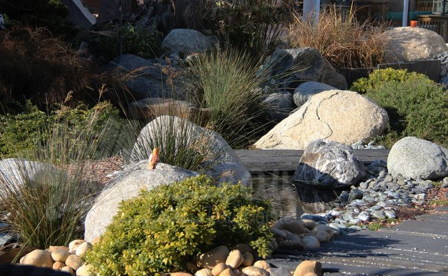 Jardin d'eau st Gely du Fesc