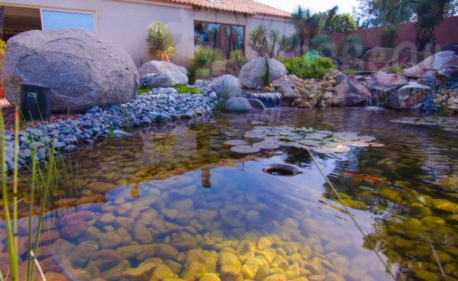 Jardin aquatique paysagiste montpellier