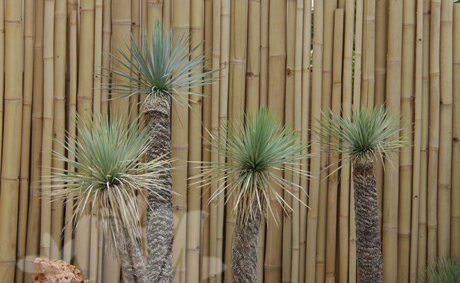 clôture jardin montpellier