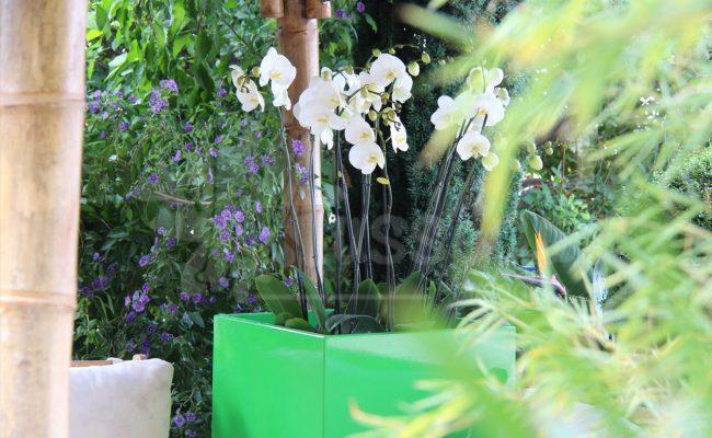 decors-jardin-bac