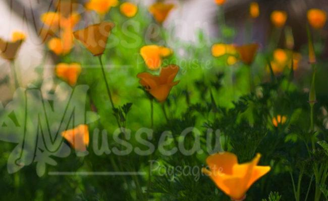 Jardin paysagiste Montpellier