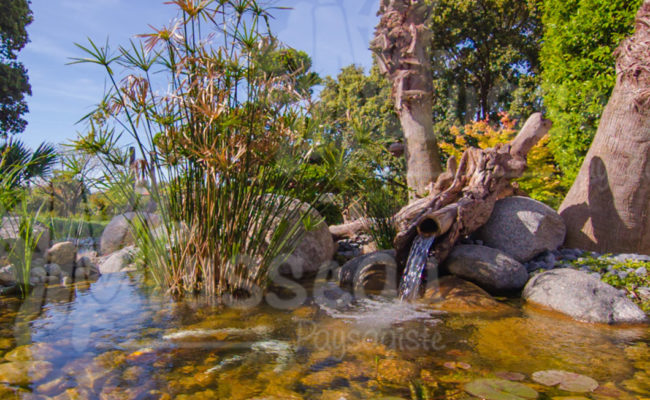 jardin-aquatique-montpellier-4