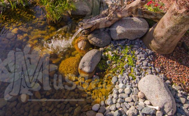 Jardin Aquatique Montpellier-5