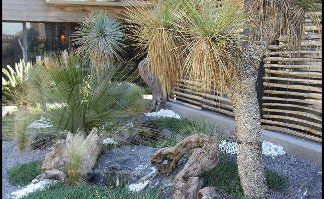 Paysagiste Montpellier -jardin sec